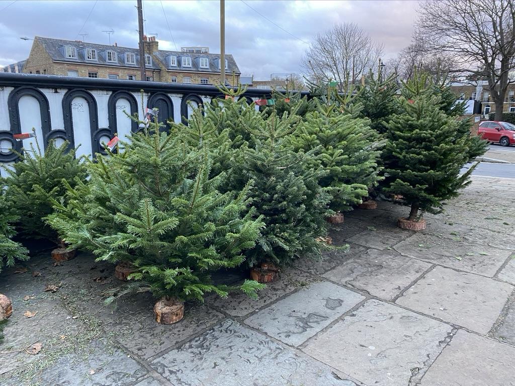 Christmas tree pop up shop